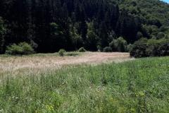 Kaulenbachtal28